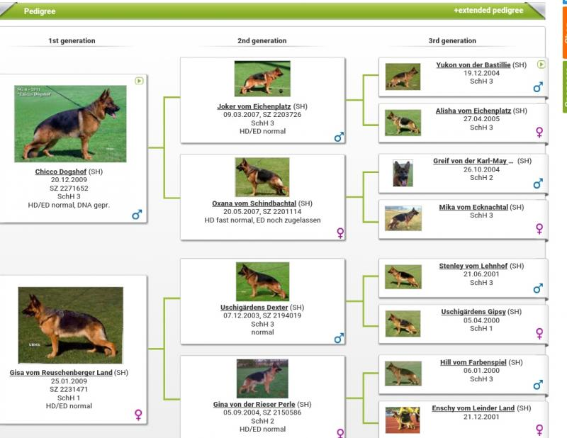 Biondina vom Settler Eck Chicco Dogshof daughter Pedigree Database