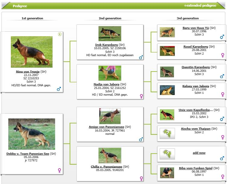 VA1-Brigit vom Panoniansee Pedigree at Elite German Shepherds Austin Texas