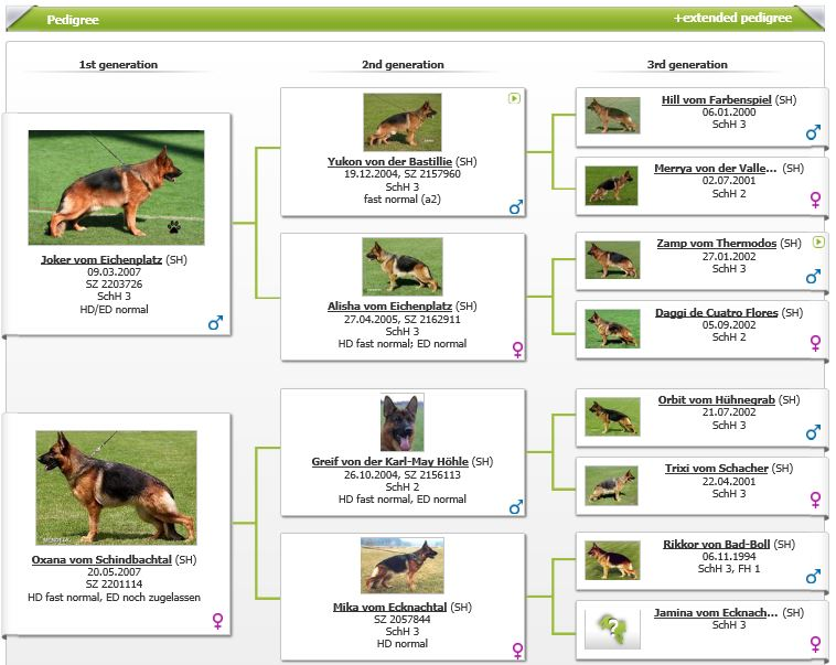 VA1-Chicco Dogshof Pups in Austin Texas Stud Service at Elite German Shepherds S