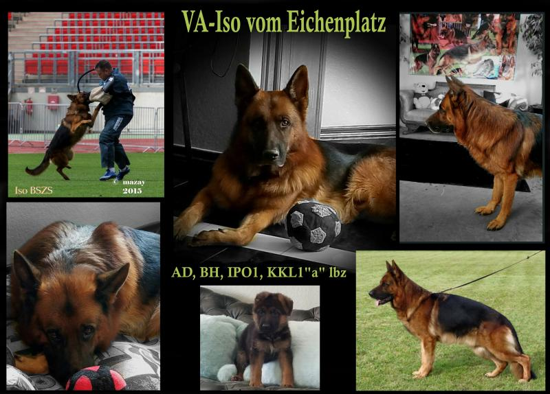 German Shepherd Breeders Kennels USA AKC Pink Papers Texas Colorado Illinois