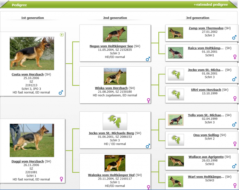 Elite German Shepherd Breeders Pedigree database Judi vom Herzbach