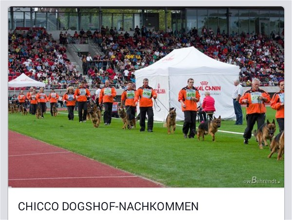Chicco Dogshof Progeny Group BSZS