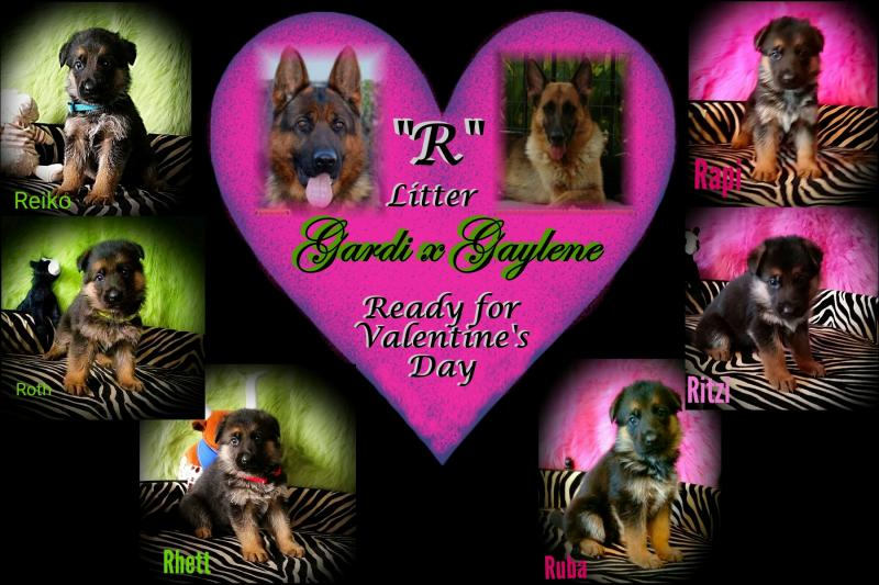 German Shepherd Breeders Austin Houstin Dallas San Antonio San Marcos Texas