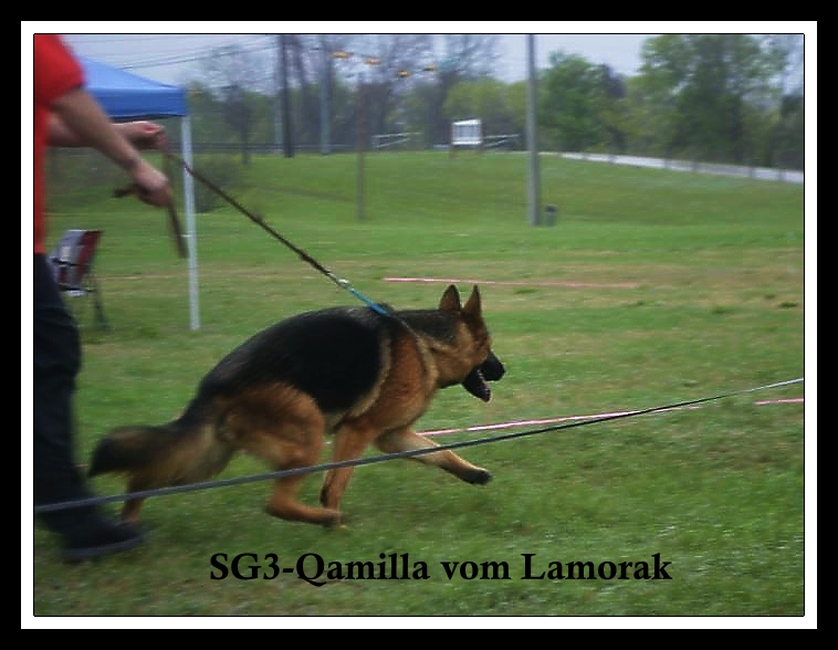 German Shepherd Breeders Austin Dallas Houston Amarillo Ft. Hood San Antonio Tx