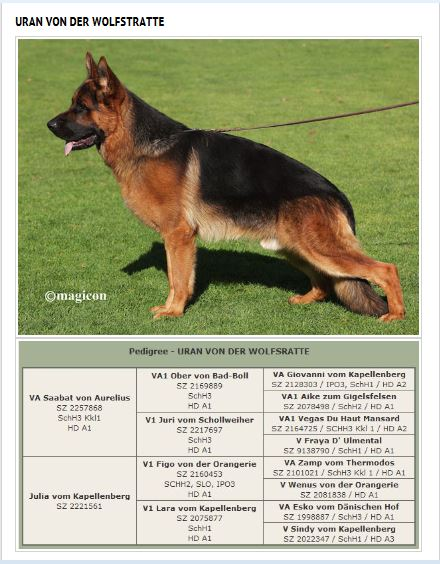 German Shepherd Breeders Florida Alabama Conneticut South Carolina Texas Chicago