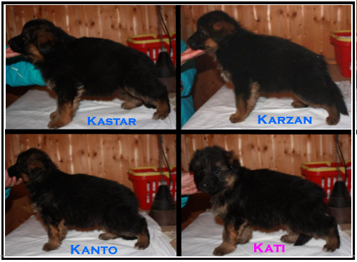 Pacco Langenbungert Pups direct from Germany