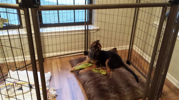 Pooch Penthouse for sale at Elite German Shepherds