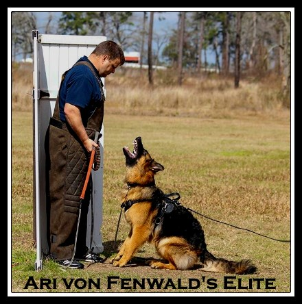 Ari von Fenwald's Elite at Schutzhund Club in Houston