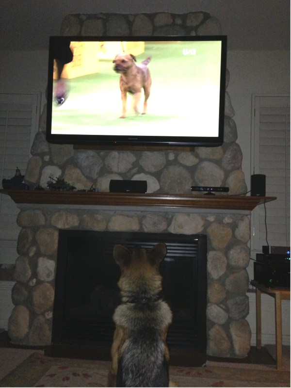 "Nino Tronje daughter ""Fiona""  watches Westminster Dog Show"