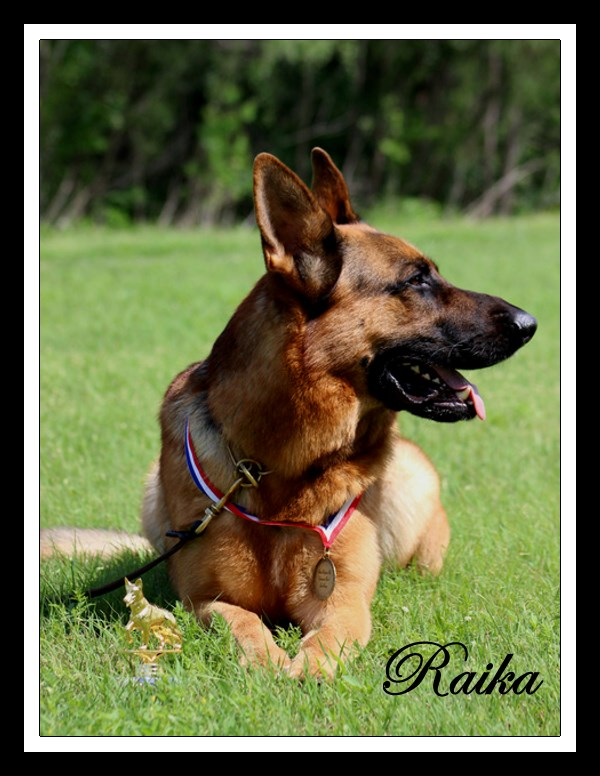 Working Class Siegerin Raika vom Herzbach of Elite German Shepherds