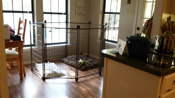 Penthouses For Pups available at Elite German Shepherds