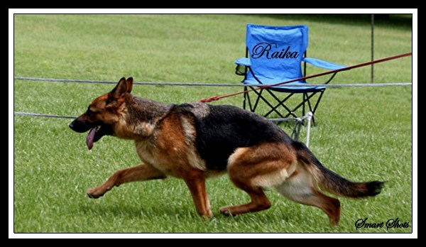 German Shepherds Home Protection Sport TX LA AZ NM NY NJ GA FL MA WA CO IL WI MN