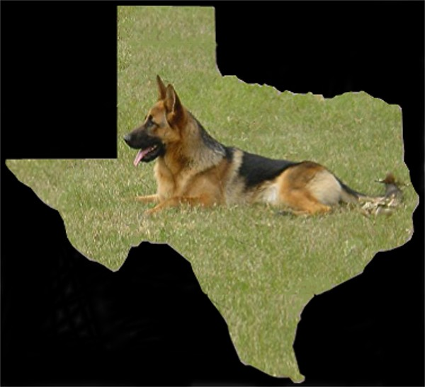 WORLD CLASS SELECT ELITE GERMAN SHEPHERDS DIRECT FROM GERMANY