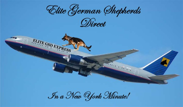 Elite German Shepherds Shipping Express Domestic and International Pet Shipping